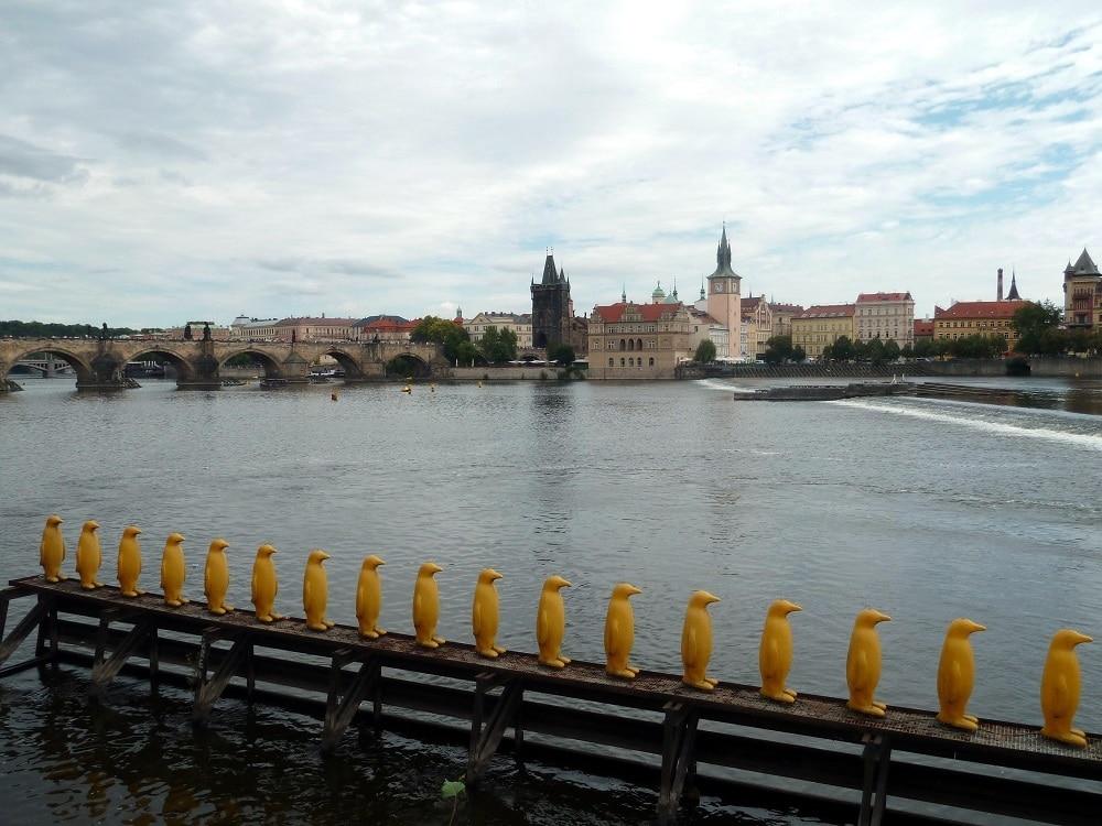 Prague pingouins Vltava